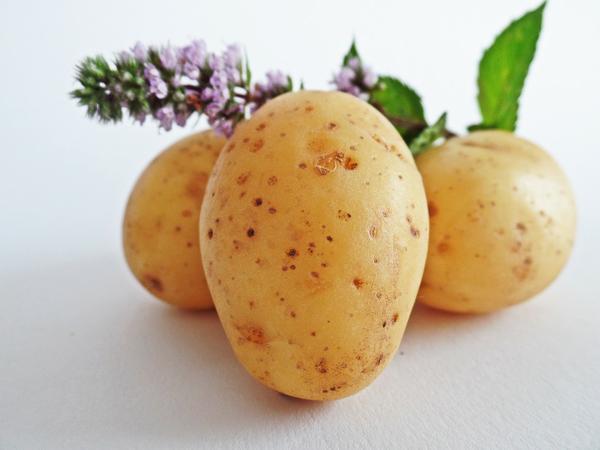 Uprawa ziemniaków oraz ich właściwe nawożenie