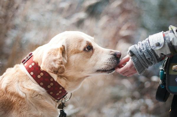 pogryzienie przez psa odszkodowanie